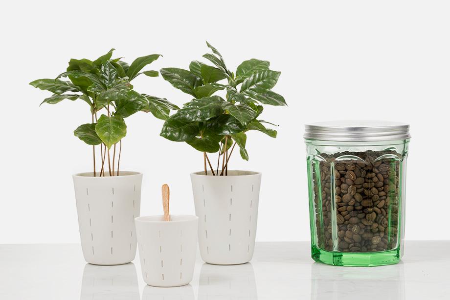 organic coffee florence