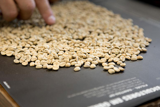 Selection of coffee grain